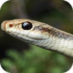 Southern California Reptiles and Amphibians
